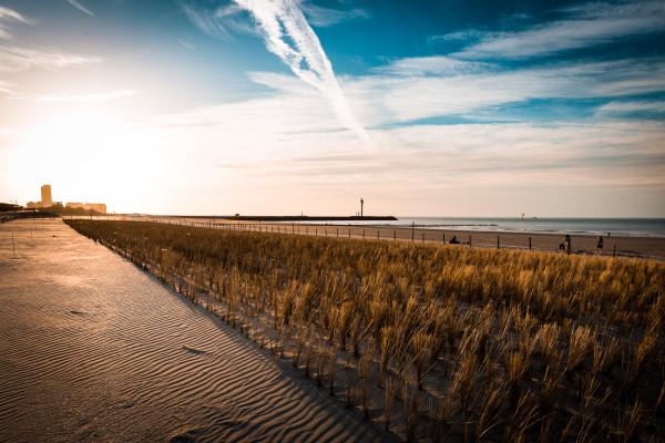 Helmgras op Oosteroever Oostende